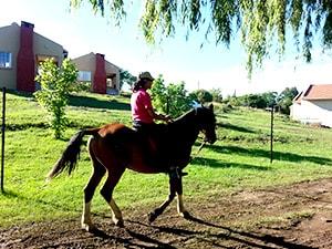 Willow-Express-Horse-Riding-03